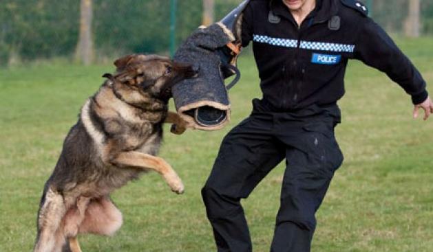 """Qeni që ka """"arrestuar"""" 142 kriminelë në 2012-ën"""