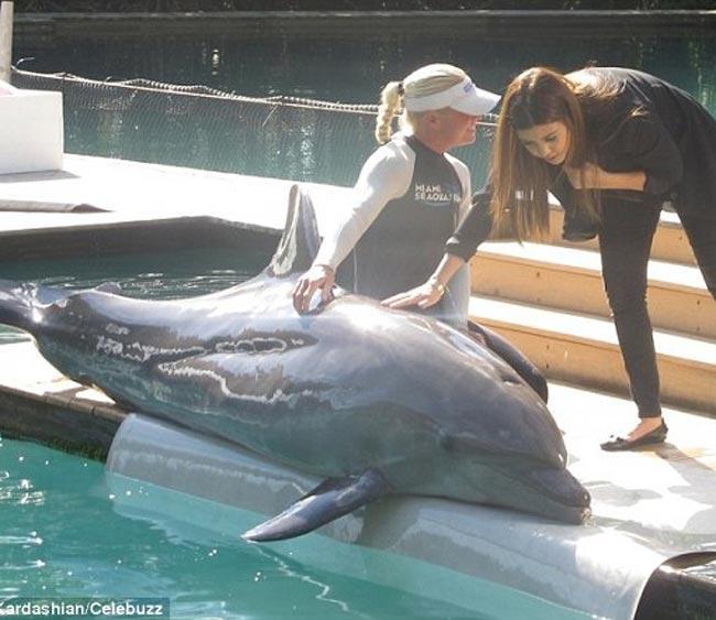 Kim, në një takim me delfinët