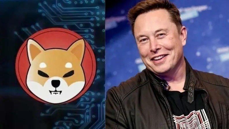 Elon Muskut blen qen të racës Shiba Inu, i rritet vlera e kriptovalutës me të njëjtin emër