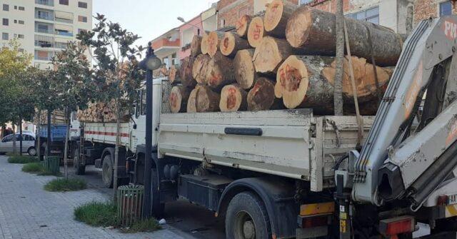 U kapën duke transportuar dru të prera në mënyrë të paligjshme, procedohen 5 persona