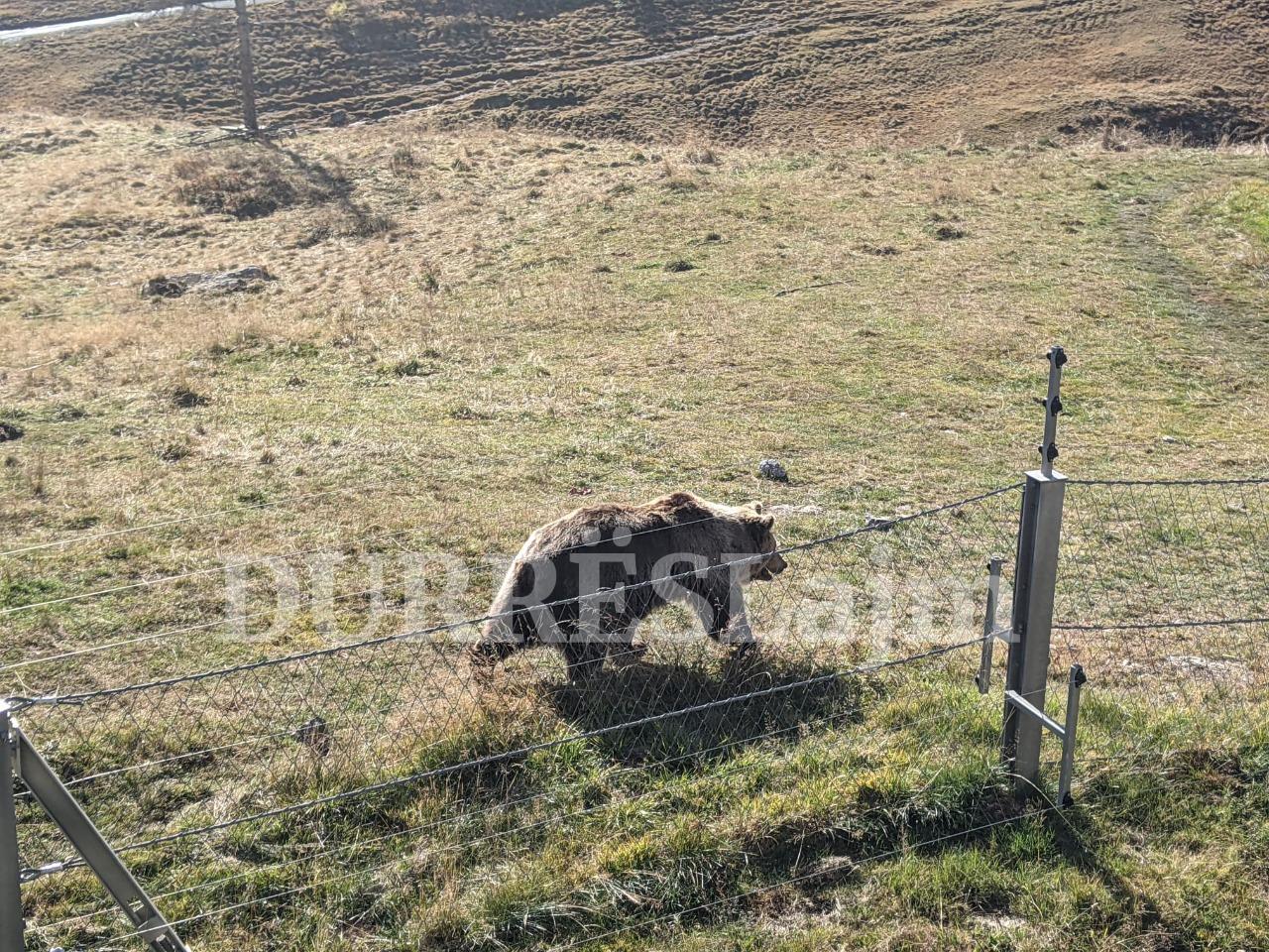Dy arinjtë e Durrësit kthehen në atraksion turistik në Zvicër (FOTO)