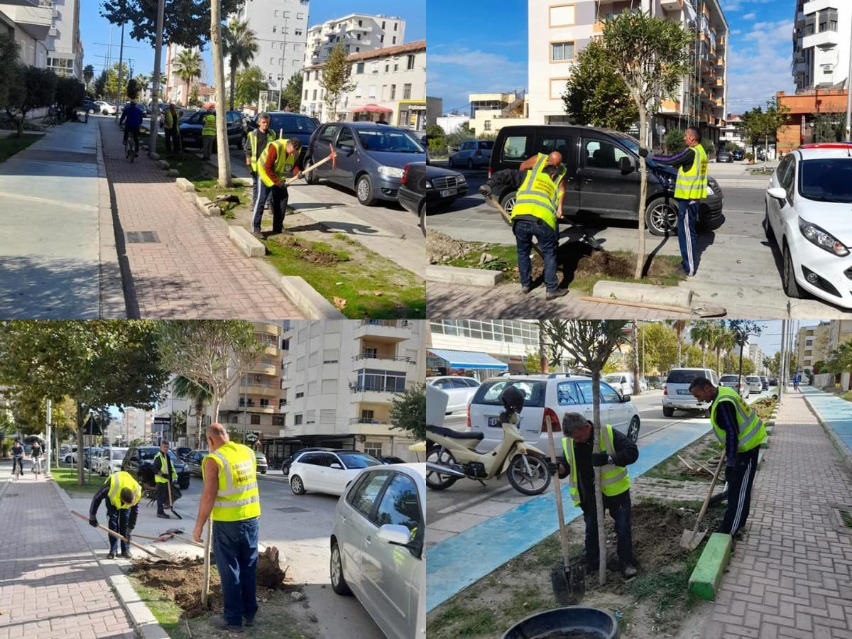"""Mbillen pemë dekorative në rrugën """"Pavarësia"""", bashkia Durrës: Përparësia jonë është të ruajmë mjedisin"""
